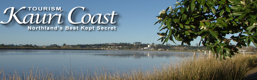 THE KAURI COAST BUSINESS